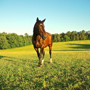 Brantome Police Horses