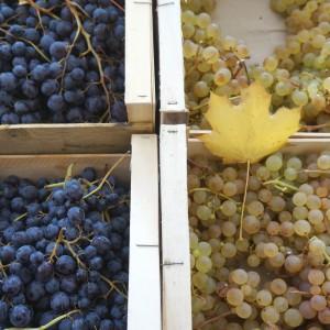 Raisins au marché de Bergerac